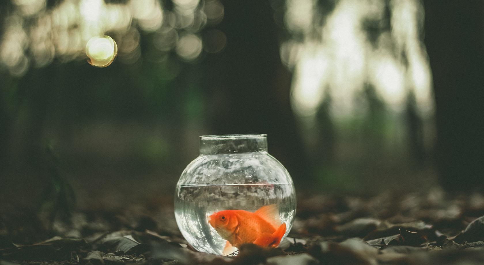 Обучение управлению – можно ли научить управлять?!